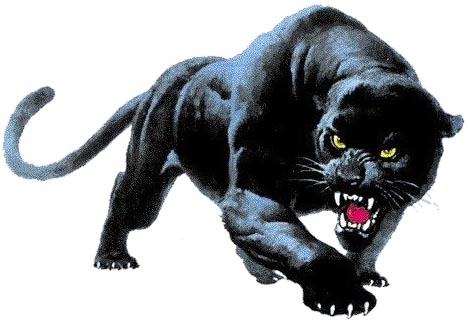 Religion Of Black Panthers Animal Species 32017